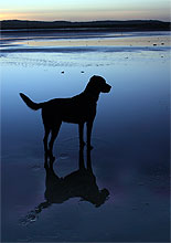 Osteoarthritis and Your Dog: Help Your Dog Live a Healthier, Happier Life by Debbie Gross Saunders