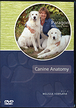 Canine Anatomy by Melissa Verplank