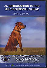 An Introduction to the Multidimensional  Canine by Mark Marsolais Ph.D.