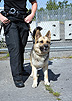 Tactical Training with Police Service Dogs by Ed Frawley